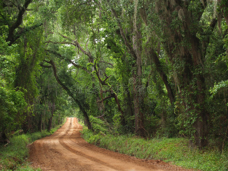 Strada campestre Canopied dell'argilla rossa fotografia stock