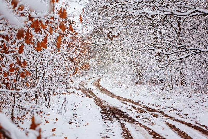 Strada campestre con i bei alberi dai lati nel giorno di inverno fotografie stock