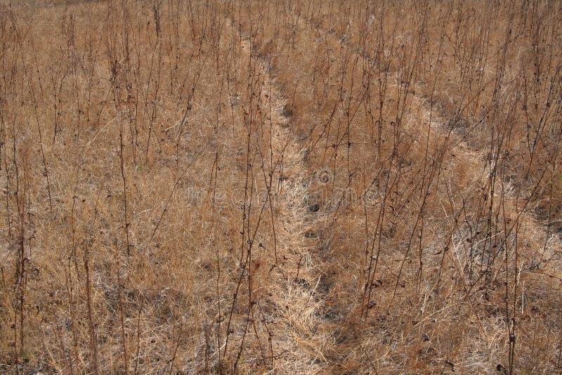 Strada campestre invasa con erba Erba asciutta immagini stock