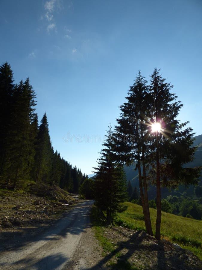 Strada campestre in montagne e sole del ` s del Montenegro dietro gli alberi immagini stock