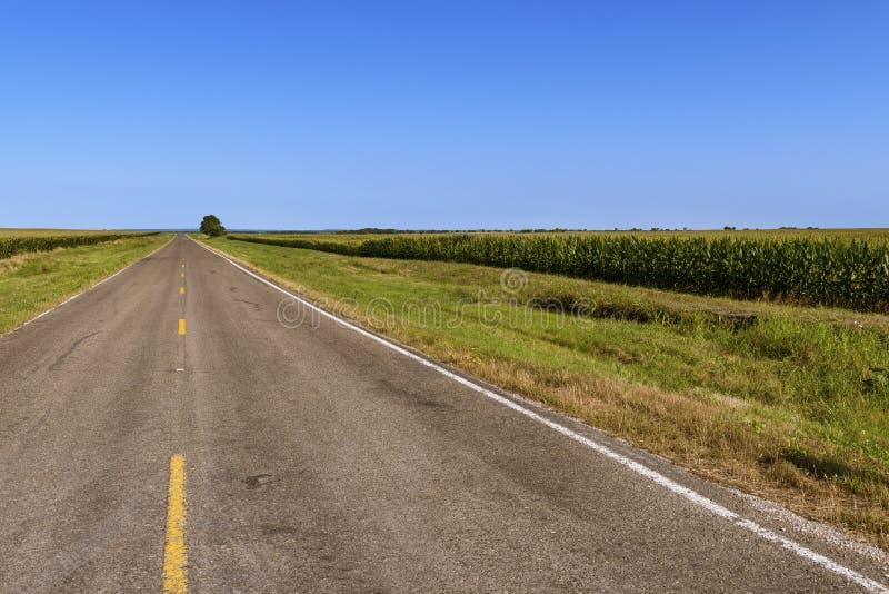 Strada campestre vuota lunga nel Texas rurale lungo un campo di mais; Concetto per il viaggio nel Texas fotografia stock libera da diritti