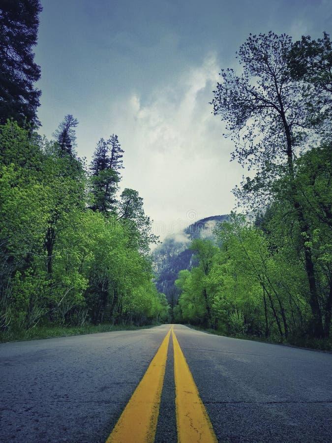 Strada cementata nel naturale fotografia stock