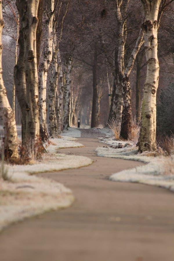 Strada con gli alberi immagini stock libere da diritti