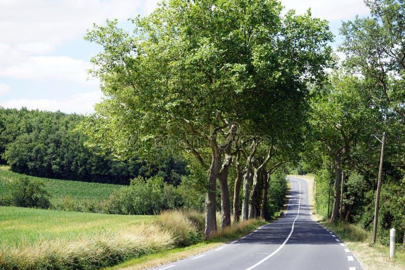 Strada con gli alberi fotografia stock