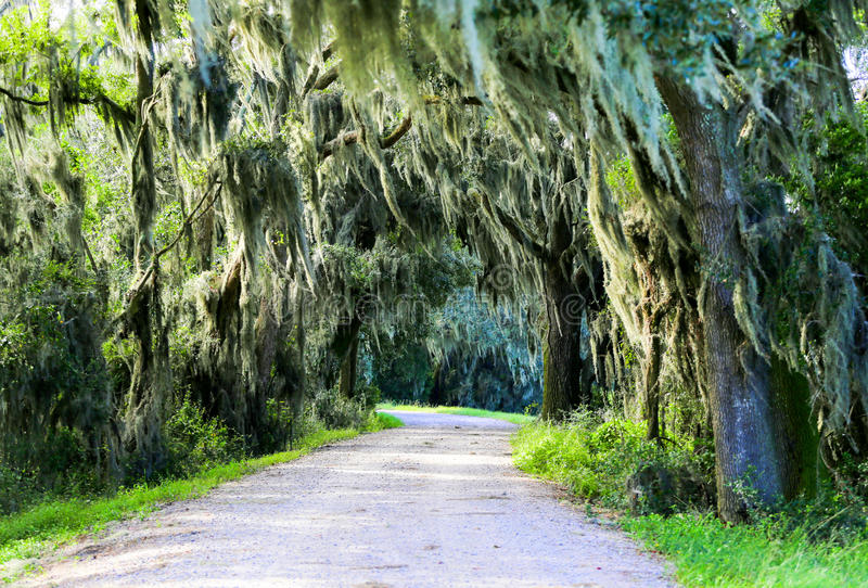 Strada con gli alberi che si sporgono con il muschio spagnolo in U.S.A. del sud fotografie stock libere da diritti