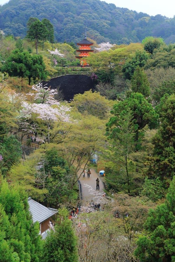 Strada con gli alberi di Sakura e tempio nel Giappone fotografie stock libere da diritti
