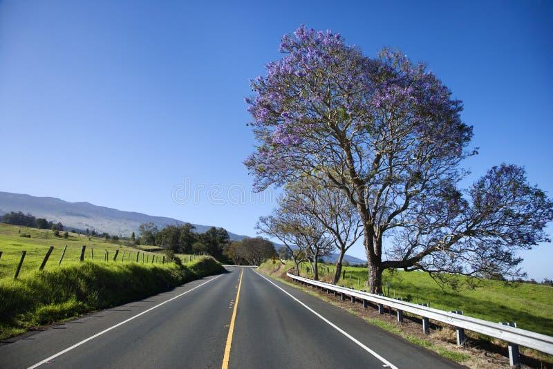 Strada con l'albero del Jacaranda in Maui, Hawai fotografie stock