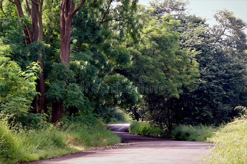 Strada con l'immagine di riserva libera della sovranità della foresta fotografia stock