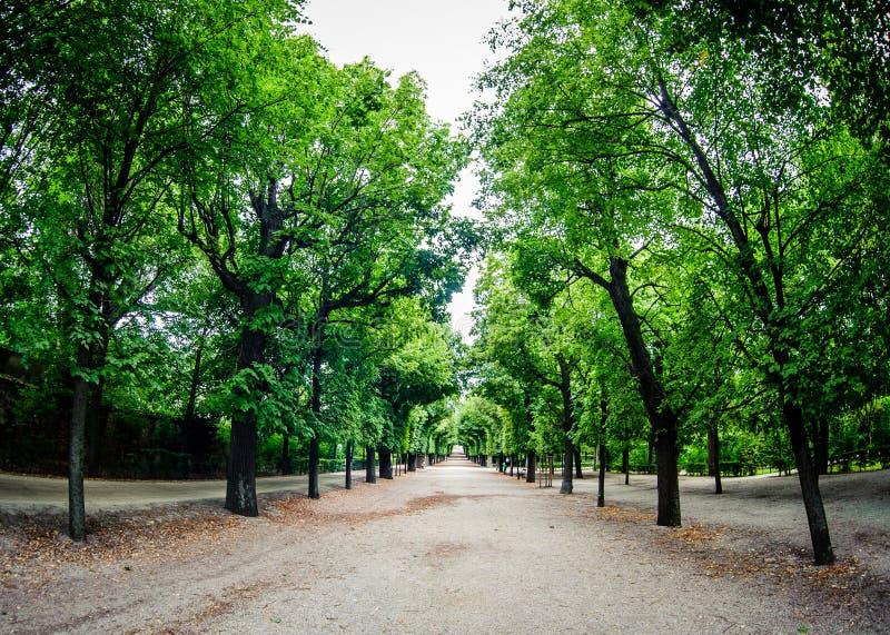 Strada con la riga degli alberi verdi immagini stock libere da diritti
