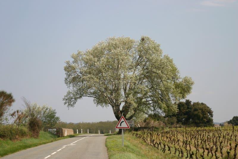 Strada con la vigna fotografie stock libere da diritti