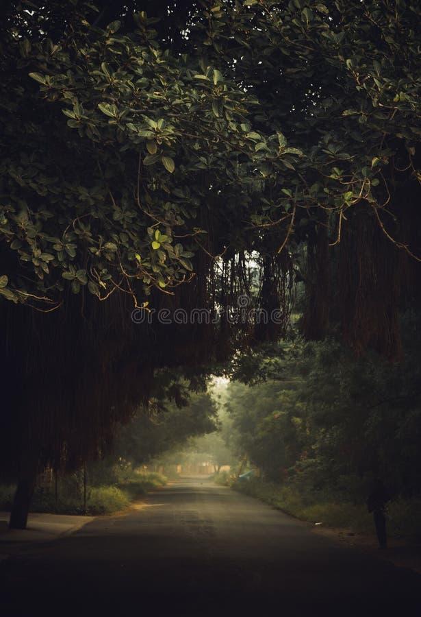 Strada coperta dagli alberi fotografia stock