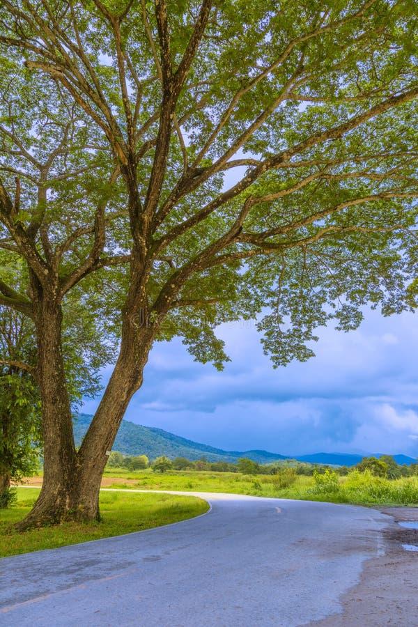 Strada curva dentro un parco naturale in Chiang Mai, Tailandia fotografie stock
