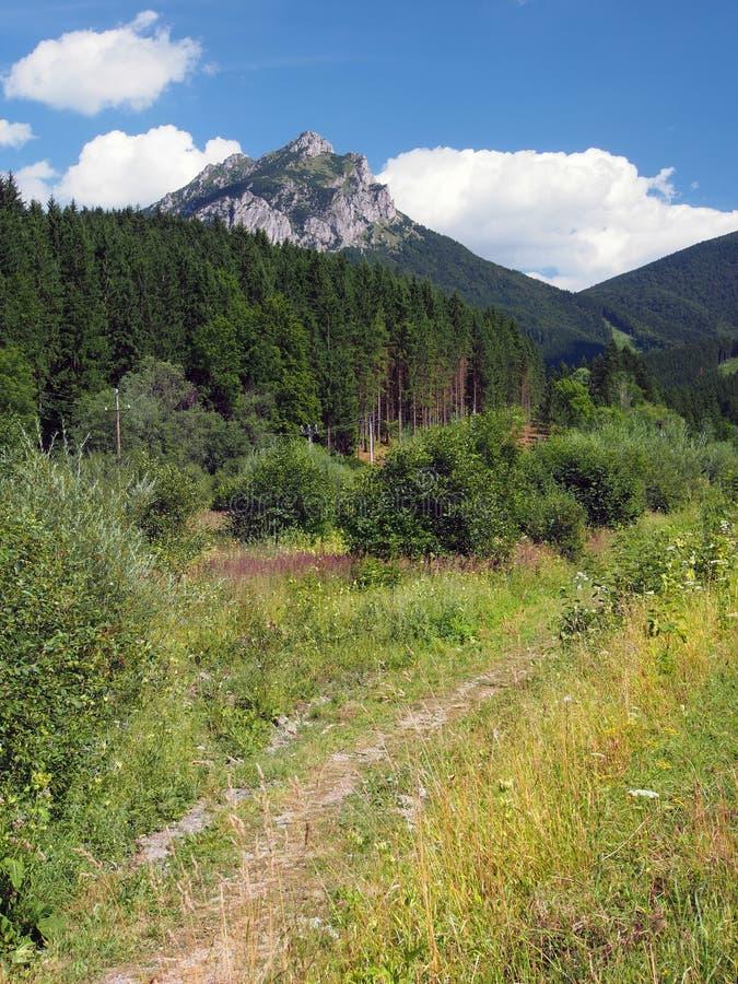 Strada del campo al picco di Velky Rozsutec immagine stock libera da diritti