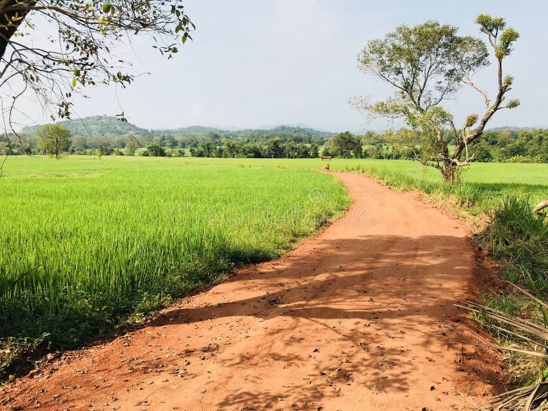Strada del villaggio rurale con risaia fotografia stock