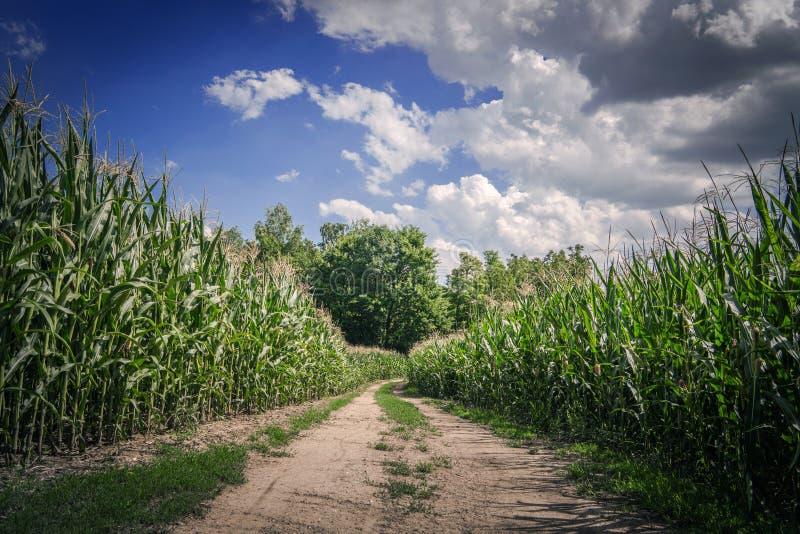 Strada della campagna dei terreni coltivabili fotografia stock