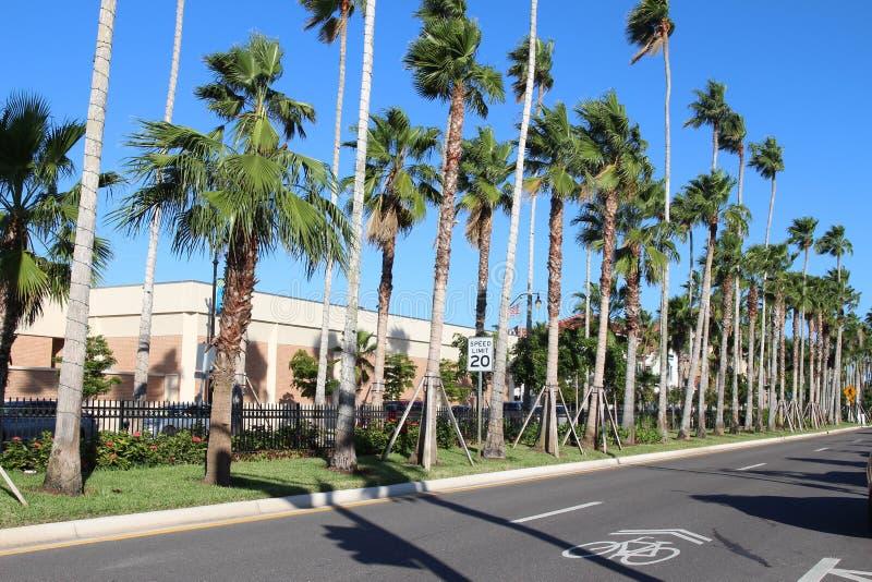 Strada della città vuota con palme alte immagine stock libera da diritti