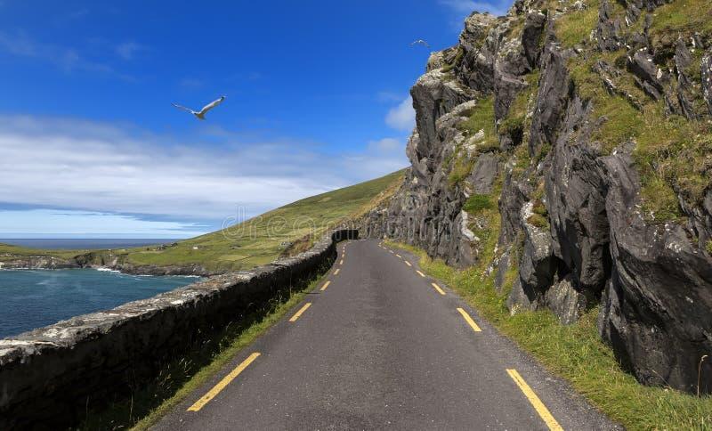 Strada della costa della singola pista alla testa di Slea in penisola delle Dingle, Irlanda fotografia stock libera da diritti