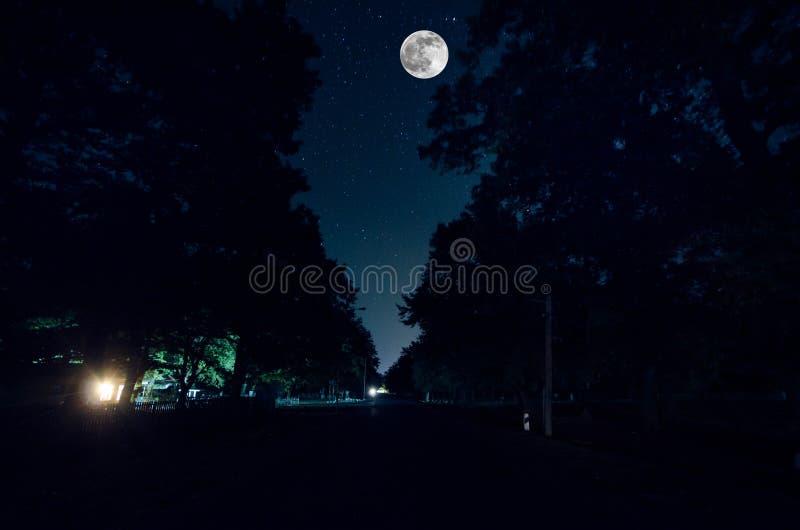 Strada della montagna attraverso la foresta su una notte della luna piena Paesaggio scenico di notte del cielo blu scuro con la l immagini stock libere da diritti