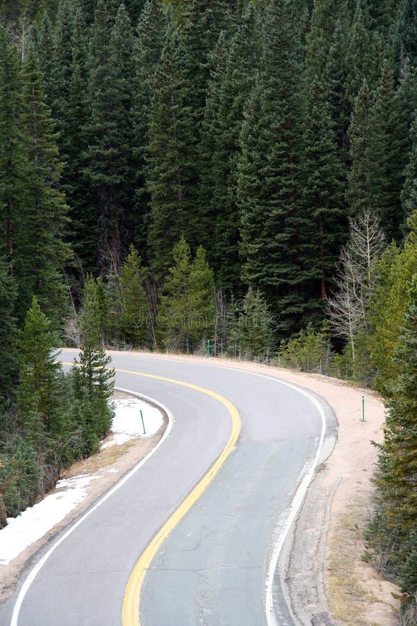 Strada della montagna incorniciata con gli alberi di pino immagini stock libere da diritti