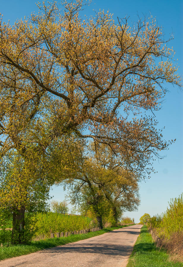 Download Strada della primavera fotografia stock. Immagine di rurale - 30830326