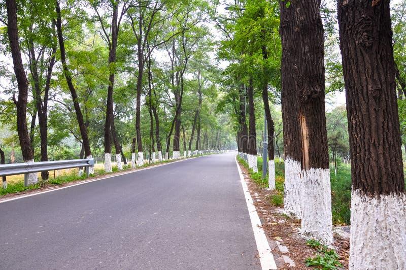 Strada di asfalto con alberi su entrambi i lati immagini stock libere da diritti