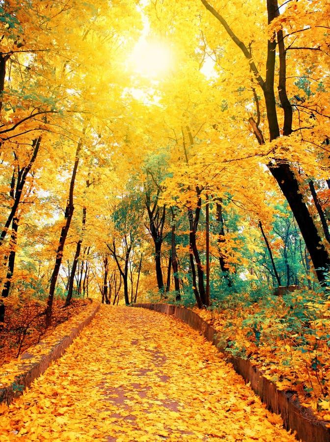 Strada di autunno nel parco fotografia stock libera da diritti