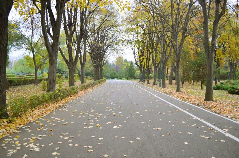 Strada di autunno nella sosta immagini stock libere da diritti