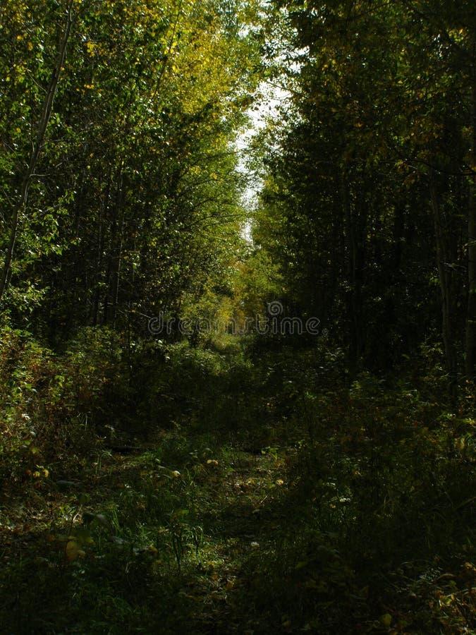 Strada di Bush fotografie stock