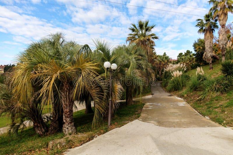 Strada di camminata nel parco immagini stock libere da diritti