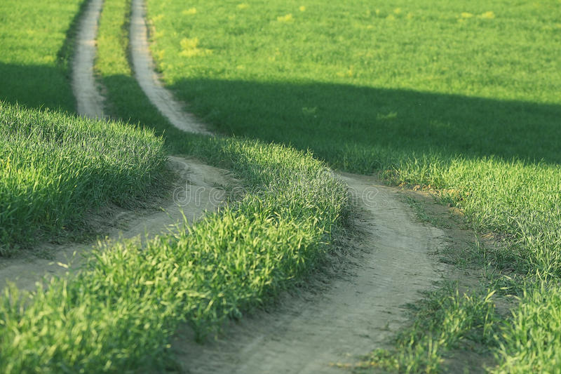 Download Strada di estate nell'erba immagine stock. Immagine di paese - 55360339