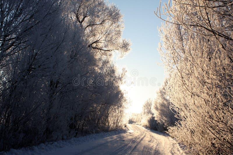 Strada di inverno nel primo mattino immagine stock