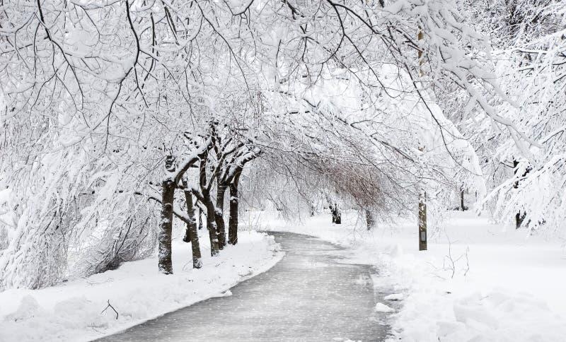 Strada di inverno sotto gli alberi immagini stock