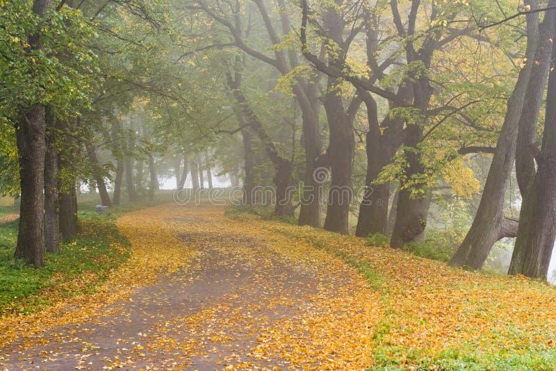 Strada di legno. Caduta. Una nebbia. immagini stock libere da diritti