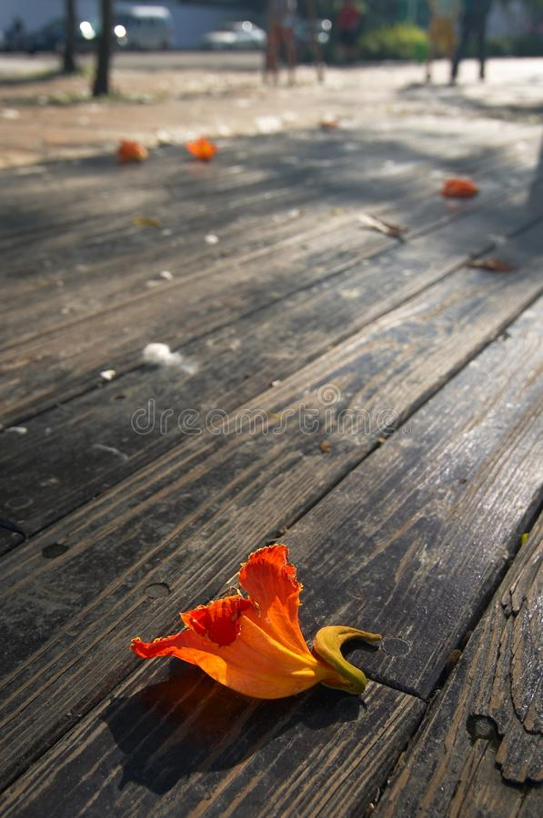 Strada di legno della plancia fotografia stock