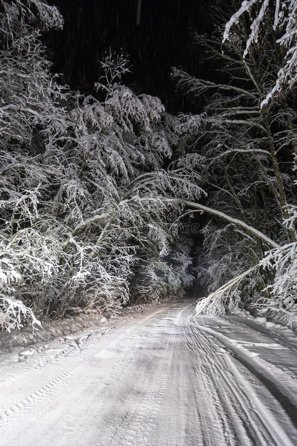 Strada di notte nella foresta di inverno immagini stock