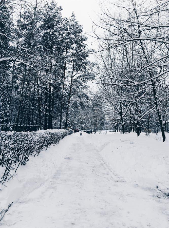 Strada di Snowy nel legno immagini stock