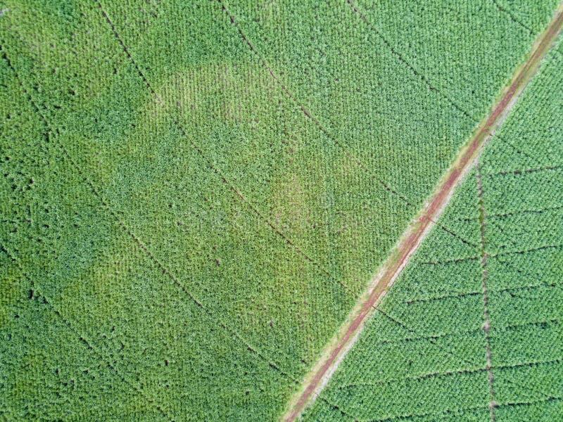 Strada di vista aerea nel giacimento della canna da zucchero immagine stock libera da diritti