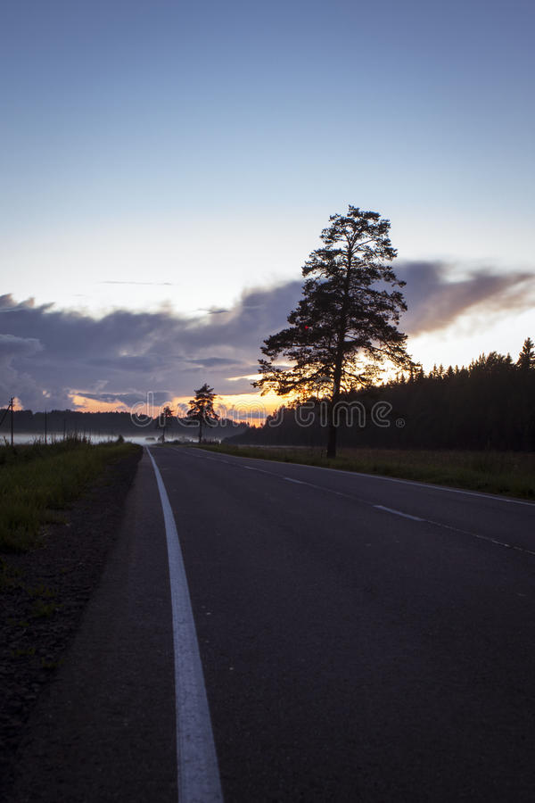 Strada e nebbia di mattina e la siluetta degli alberi fotografia stock libera da diritti