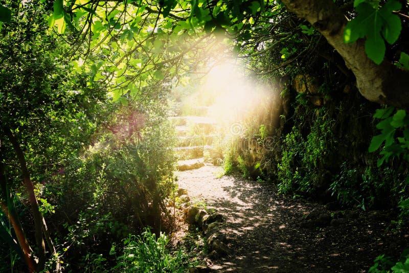 Strada e scale di pietra in foresta scura magica e misteriosa con la luce mistica del sole Concetto di fiaba immagini stock