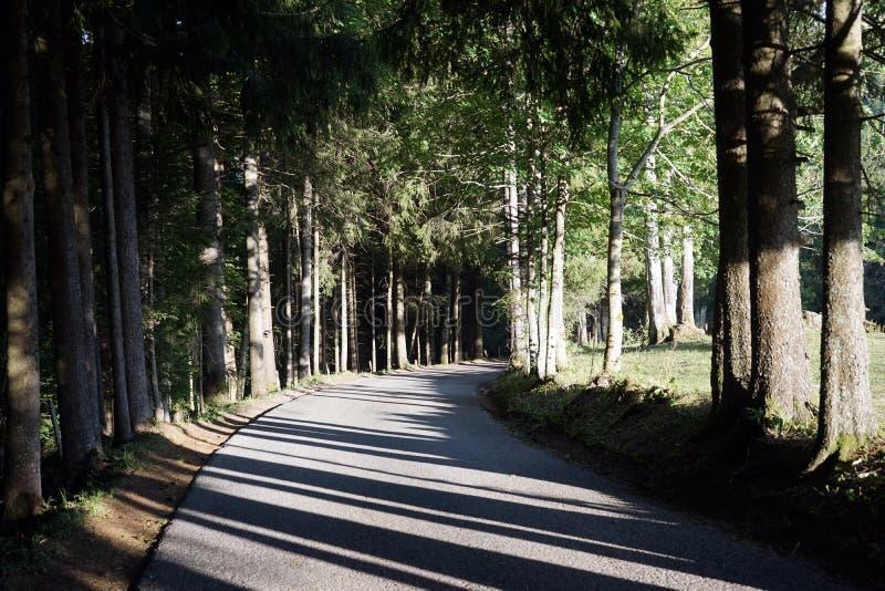 Strada ed alberi fotografie stock libere da diritti