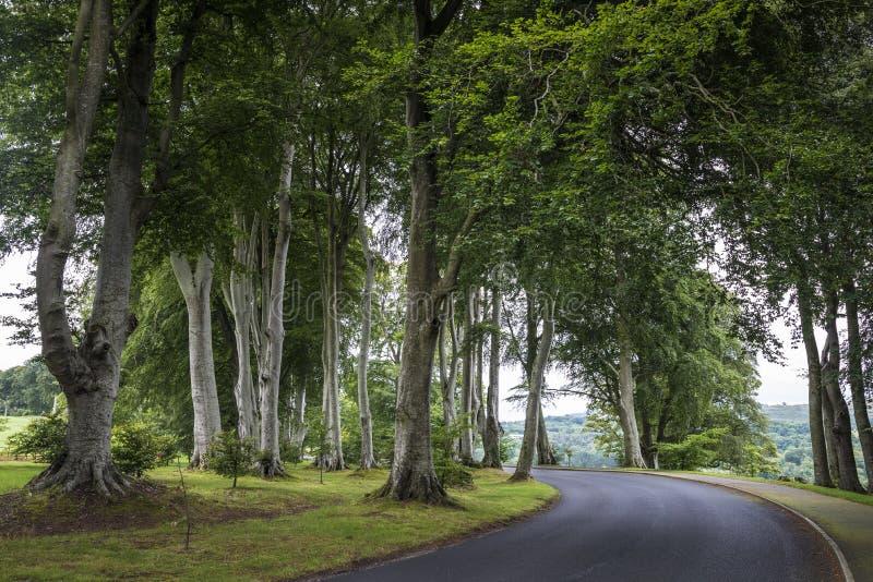 Strada in foresta con i bei alberi alti in Irlanda, Wicklow immagini stock libere da diritti