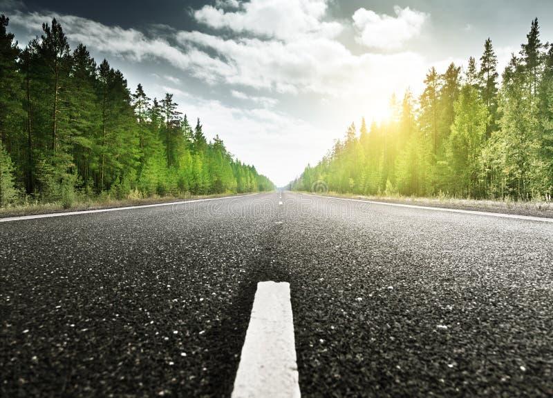 Strada in foresta profonda immagine stock
