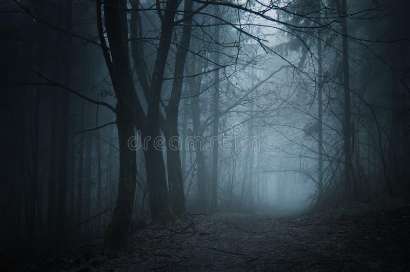 Strada in foresta scura con nebbia alla notte fotografia stock