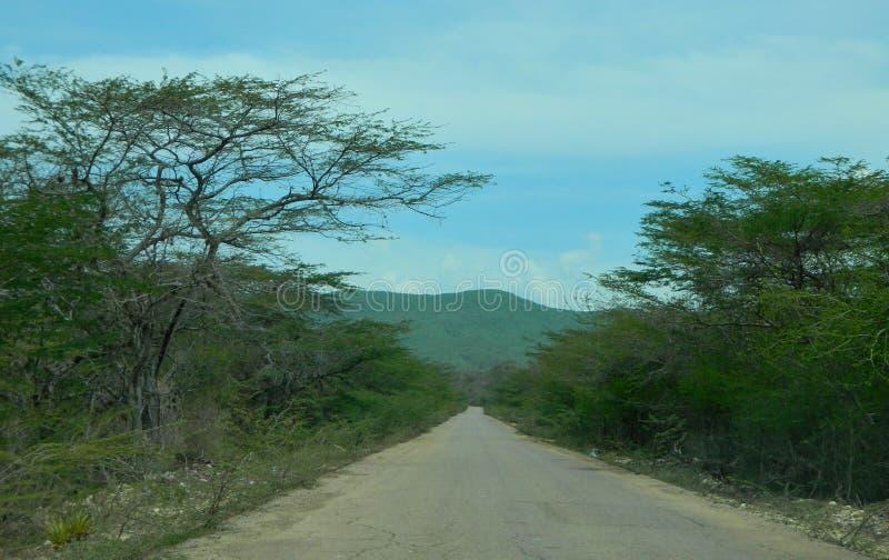 Strada fra gli alberi fotografia stock