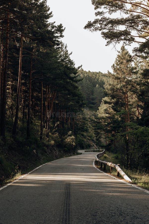Strada fra i pini nelle montagne fotografie stock