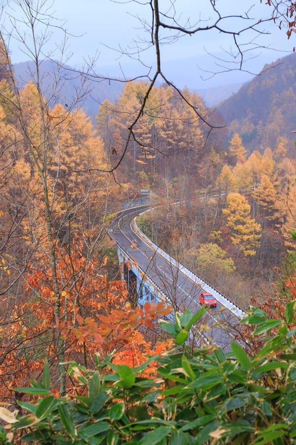 Strada fra la foresta di autunno in valle di Nakatsugawa - Yama, Fukushima, Giappone fotografia stock libera da diritti
