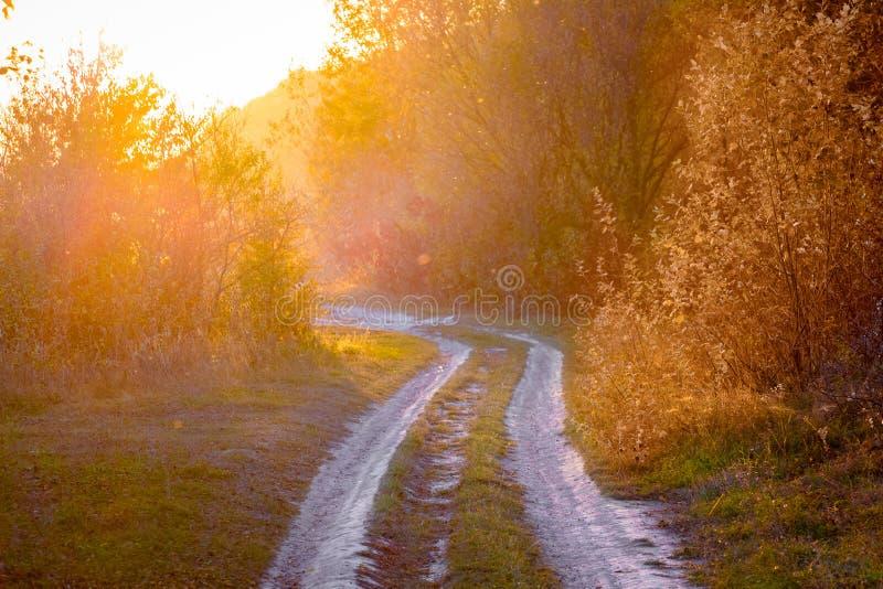 Strada frantumata fra gli alberi durante il tramonto, paesaggio nel tones_ rosso caldo fotografia stock