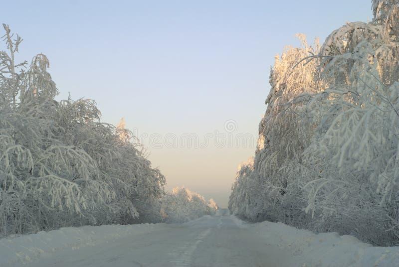 Strada ghiacciata di inverno nella foresta innevata immagine stock libera da diritti
