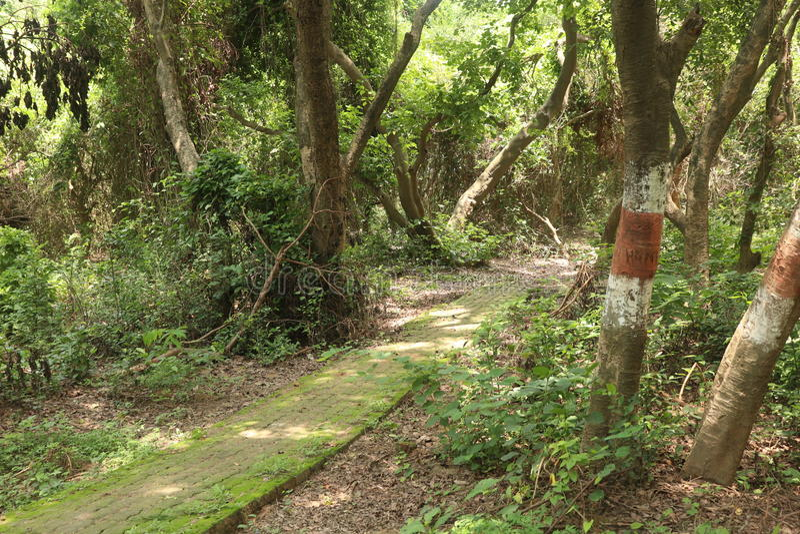 Strada in giardino sotto l'albero con lo shain del sole immagine stock