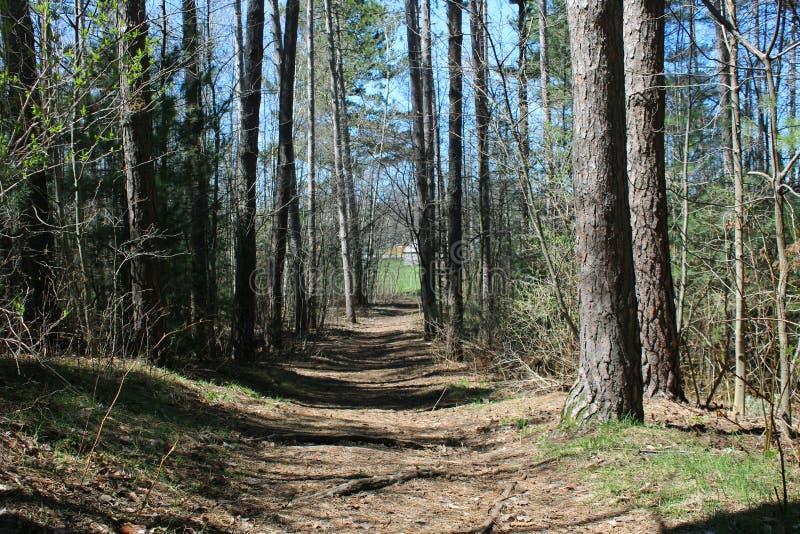 Strada gli alberi nel parco fotografie stock
